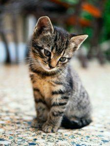 Dar gato por liebre